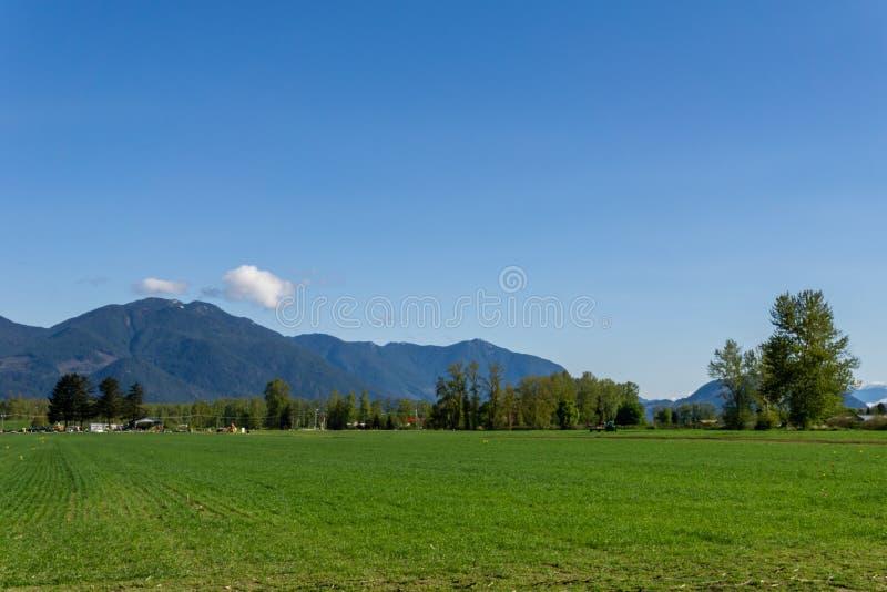 CHILLIWACK, CANADA - 20 APRILE 2019: grande campo verde all'azienda agricola in Columbia Britannica al giorno di molla soleggiato fotografia stock libera da diritti