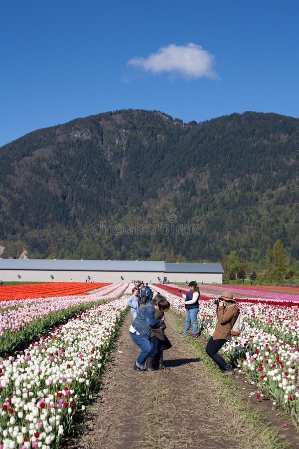 CHILLIWACK, CANADA - 20 APRILE 2019: la gente che prende le immagini al Chilliwack Tulip Festival in Columbia Britannica fotografia stock libera da diritti