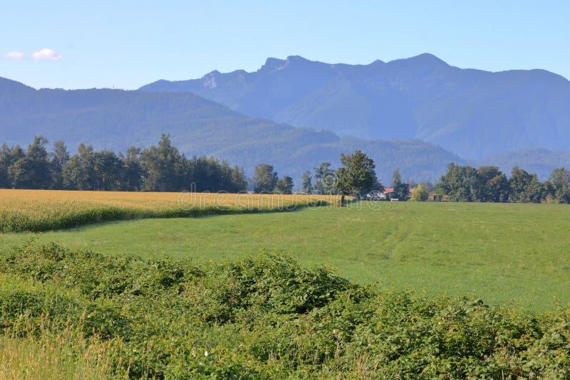 Chilliwack Rolniczy krajobraz zdjęcia stock