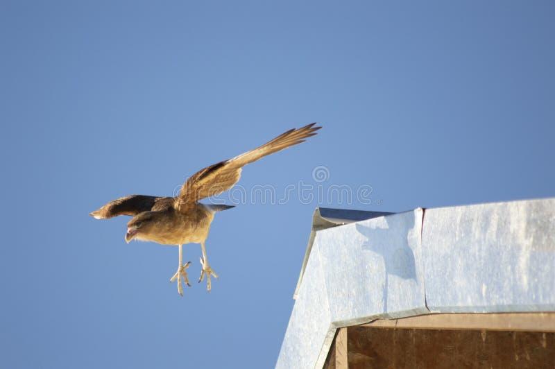 CHIMANGO CARACA FLYING stock photo