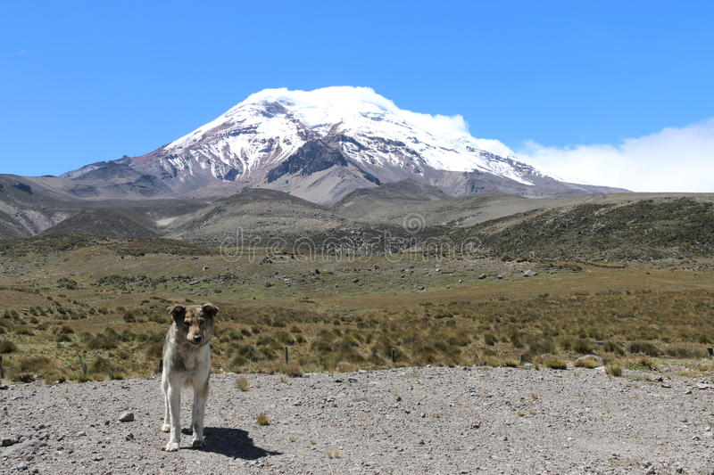 Chimborazo stock images