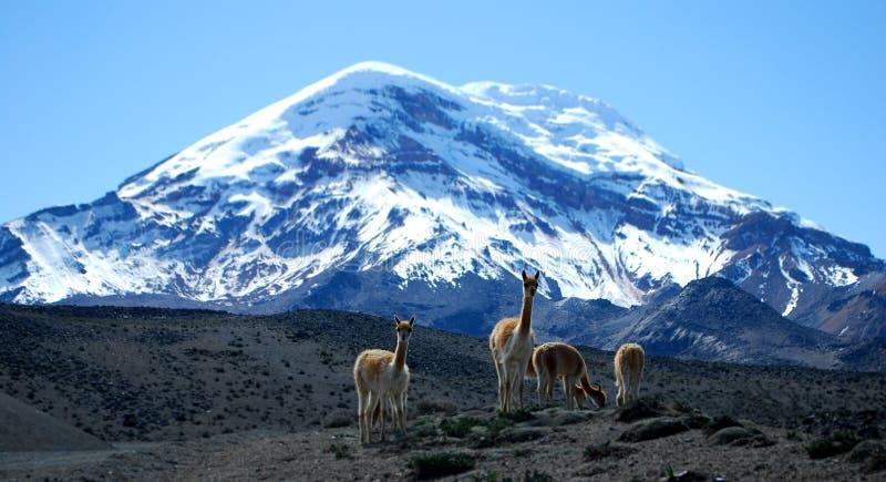 Chimborazo wulkan obrazy stock