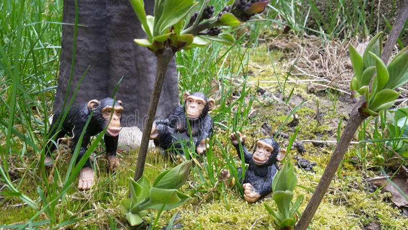 Chimp family. In rainforest royalty free stock photos