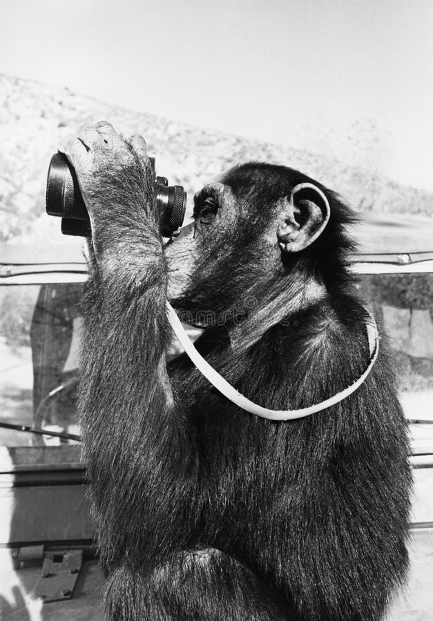 Chimpansee die door verrekijkers kijken (Alle afgeschilderde personen leven niet langer en geen landgoed bestaat Leveranciersgara royalty-vrije stock afbeelding