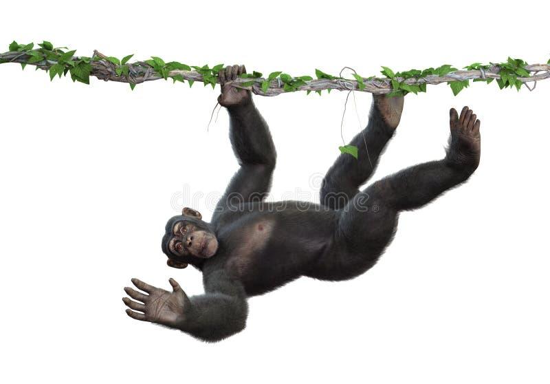 Chimpansee het Hangen van een Wijnstok royalty-vrije illustratie
