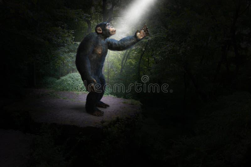 Chimpansee, Chimpansee, Wildernis, Afrika, Hoop, Licht