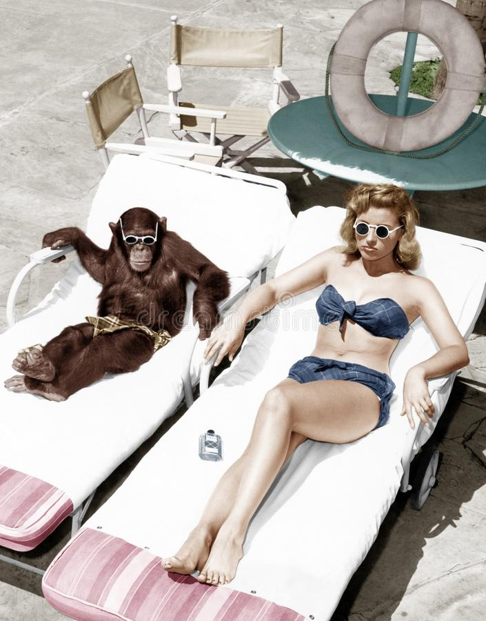 Free Chimpanzee And A Woman Sunbathing Royalty Free Stock Image - 52029136