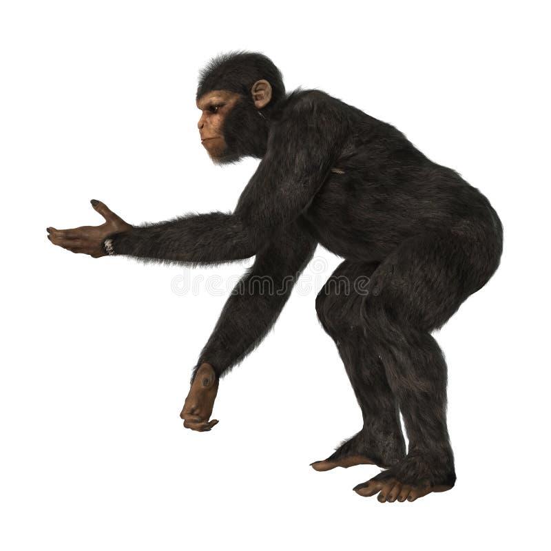 Chimpanzee Monkey on White. 3D digital render of a big chimpanzee monkey isolated on white background royalty free illustration