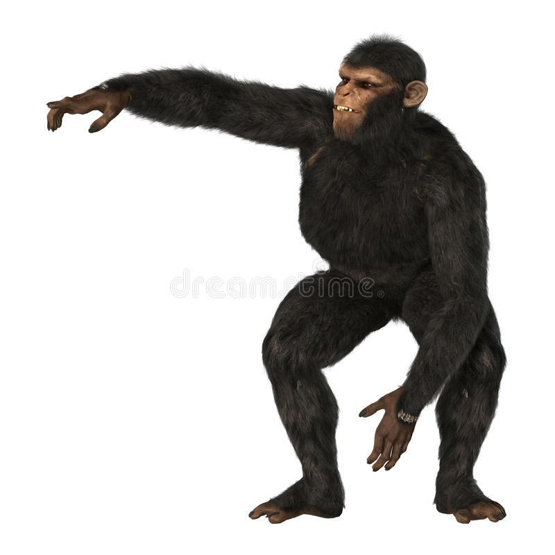 Chimpanzee Monkey on White. 3D digital render of a big chimpanzee monkey isolated on white background stock illustration