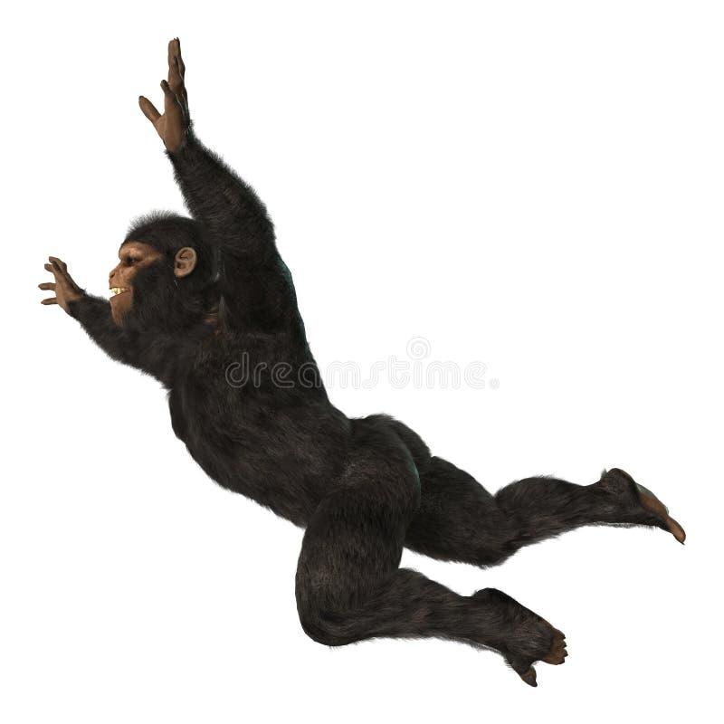 Chimpanzee Monkey on White. 3D digital render of a big chimpanzee monkey isolated on white background vector illustration