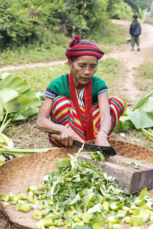 Chin tribe tattoed woman (Ngagah). KANPETLET MYANMAR, DECEMBER 9: Chin tribe tattoed woman (Ngagah) busy cutting vegetables for feeding livestock on December 9 royalty free stock image