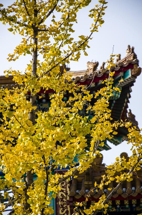 China ancient architecture in autumn. Henan province has a long tradition culture and history which has many excellent cultural projects from time immemorial royalty free stock photos