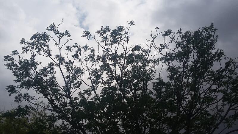 China Berry tree royalty free stock photo