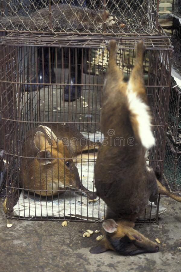 CHINA CANTON MERCADO ANIMAL DE GUANGZHOU foto de archivo