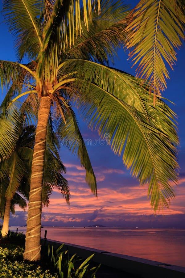 China de Sanya Hainan de la puesta del sol del árbol de coco fotografía de archivo libre de regalías
