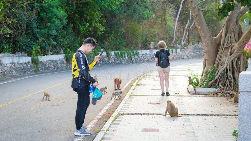 China, Hainan-Eiland, Sanya - Mei 15, 2019: Een troep van wilde apen ging op de weg naar de verrukking van toeristen stock afbeeldingen