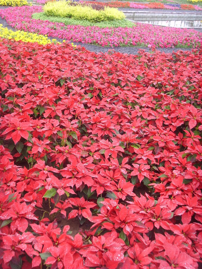 China Jinzhou International Horticultural Exposition-flower stock images