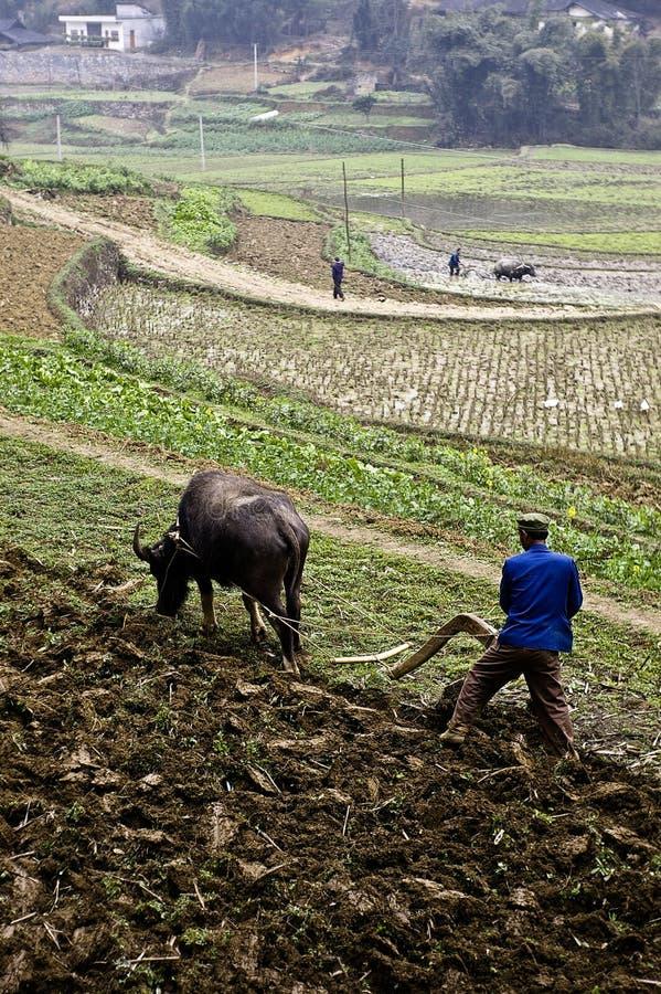 China landwirtschaftlich lizenzfreie stockfotos