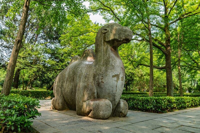 China Nanjing Ming Xiaoling Mausoleum 17. Nanjing Ming Xiaoling Mausoleum Elephant Road Spirit Way Low Angle View of a Sitting Camel Sculpture stock photos