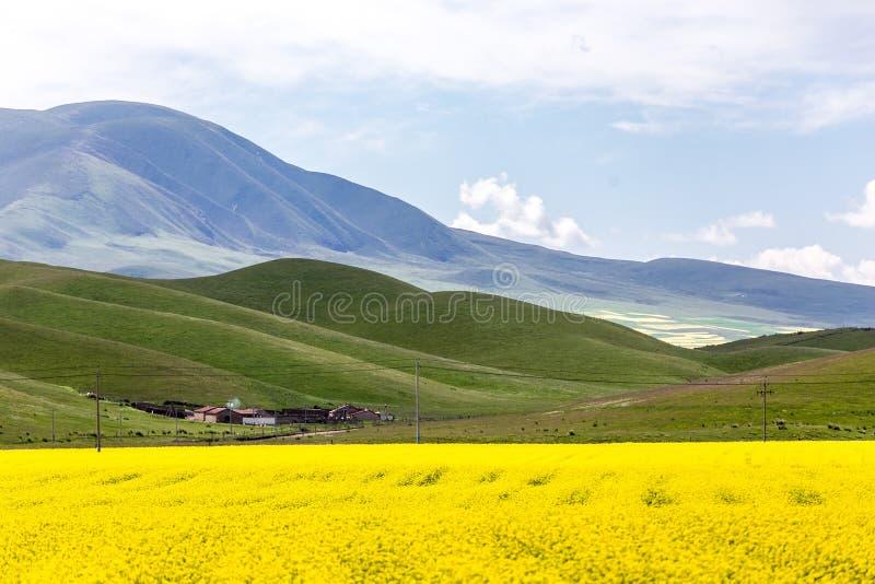 China Qinghai Lake in bloom. China Qinghai Lake in full bloom royalty free stock photos