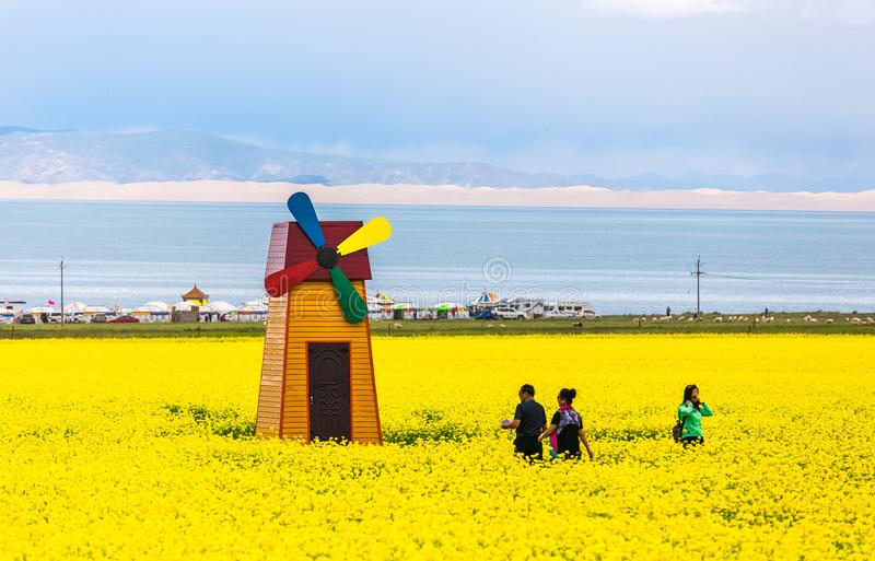 China Qinghai Lake in bloom royalty free stock photos