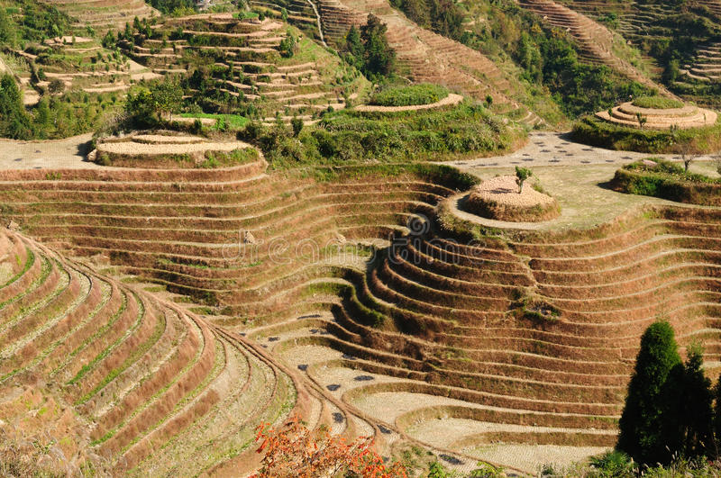 Download China - rice terraces stock photo. Image of destinations - 17610660
