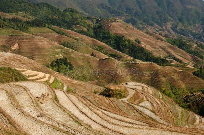 China - Rice Terraces Stock Photos
