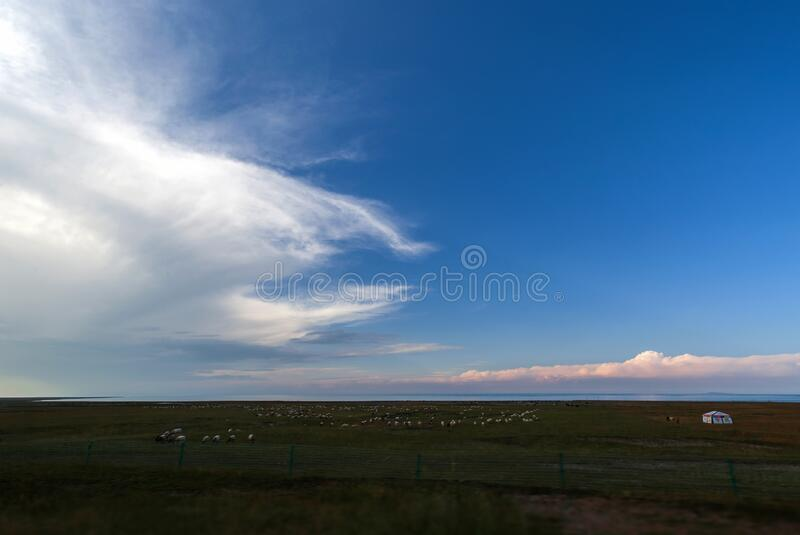 China`s biggest grassland in Xinjiang stock photography