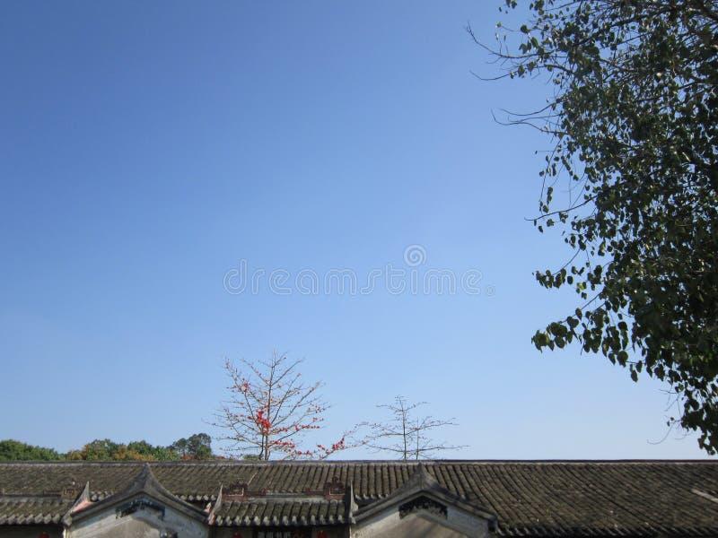 2018; China shenzhen Installatiebloemen in de lente stock afbeeldingen