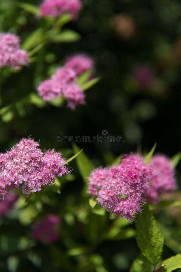 China soleada del verano de la flor hermosa imagenes de archivo