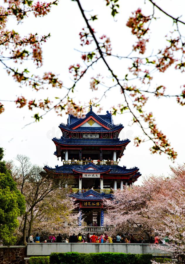 China Wuxi Shantou Cherry Blossom Festival royalty free stock photos