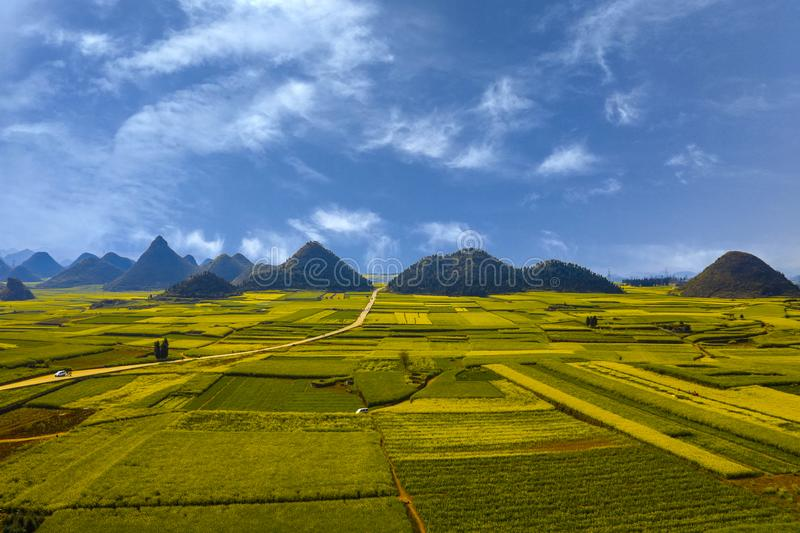 China Yunnan Luoping Jinjifengcong Rapeseed flowers royalty free stock images