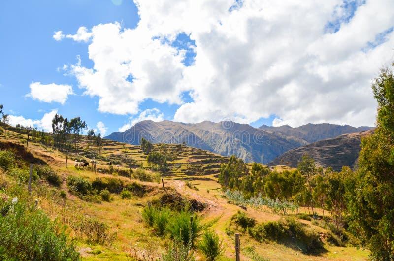 CHINCHERO, PERU CZERWIEC 3, 2013: Krajobraz tradycyjny inka uprawia ziemię tarasy obrazy royalty free