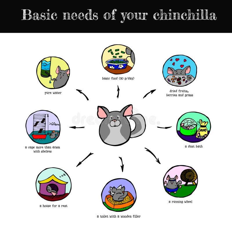 Chinchilla's needs scheme. A visual and colorful scheme of basic chinchilla's needs, hand drawn vector illustration royalty free illustration