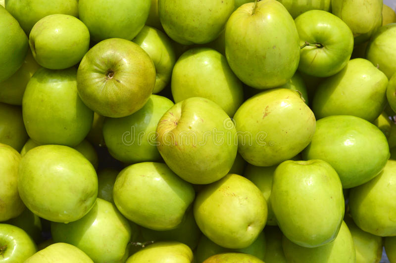 Chinee Apple. Ziziphus mauritiana - known as Ber, Chinee Apple, Jujube, Indian plum royalty free stock image