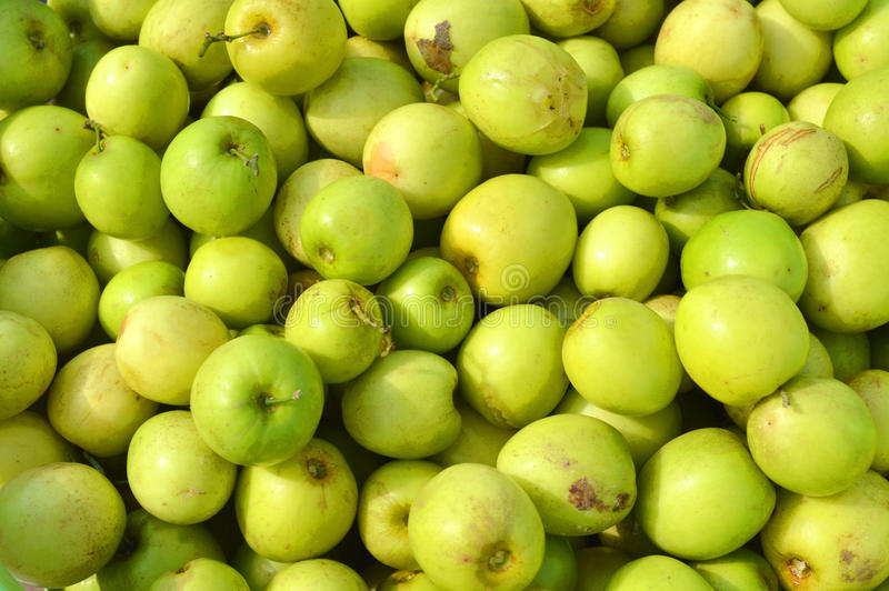 Chinee Apple. Ziziphus mauritiana - known as Ber, Chinee Apple, Jujube, Indian plum royalty free stock photography