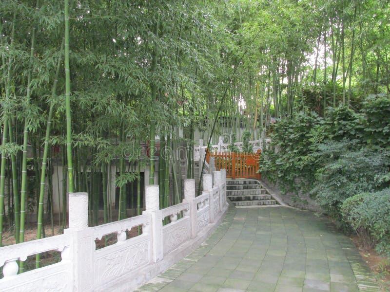 Chinees bamboebos stock foto