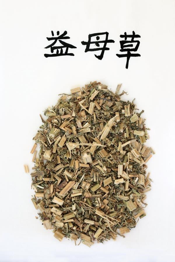 Chinees Motherwort-Kruid stock foto
