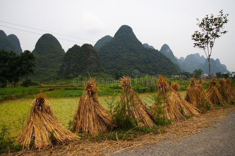 Chinees padieveldlandschap stock afbeeldingen