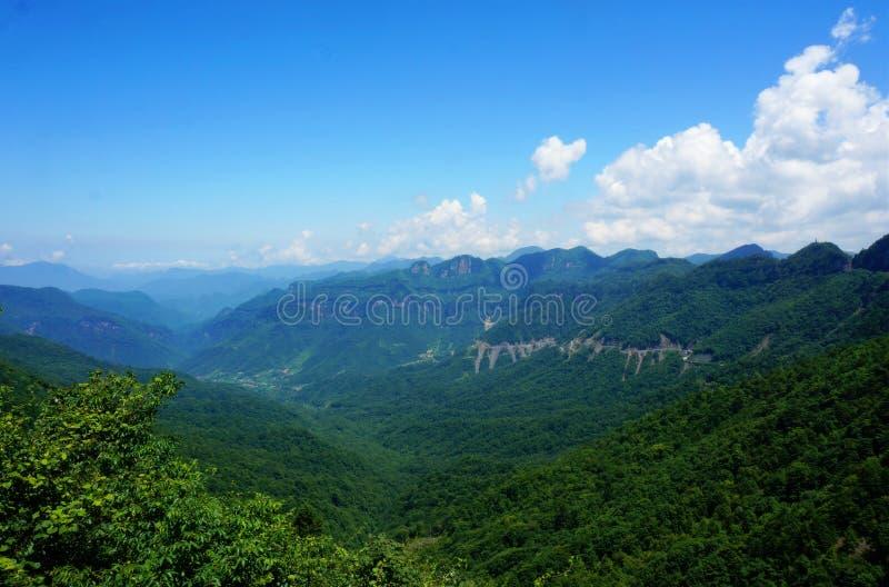 Chinees shennongjia primitief bos stock afbeeldingen