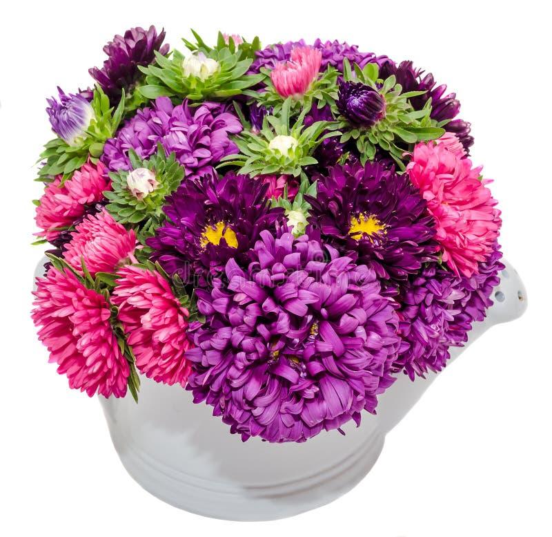 Chinensis blommor för livlig kulör Callistephus arkivbild