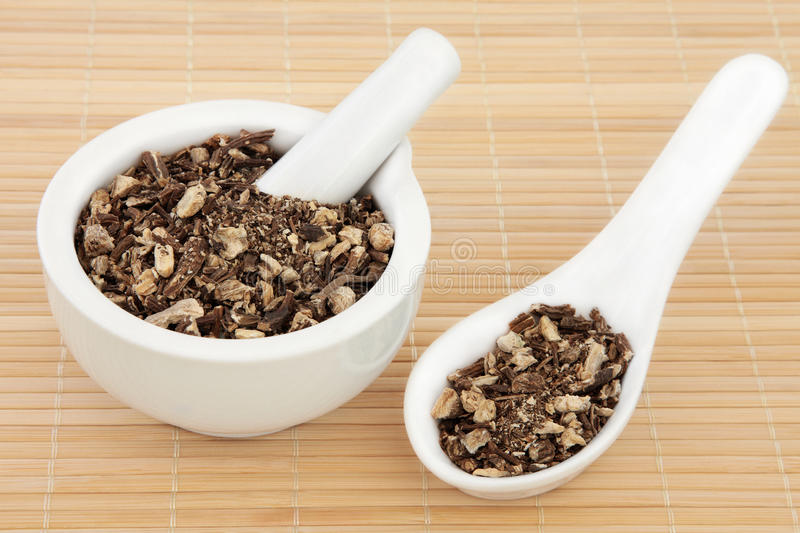 Chinese Angelica royalty free stock images