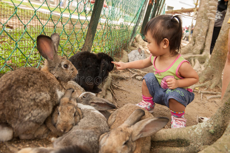 Chinese Asian girl playing with rabbits stock images