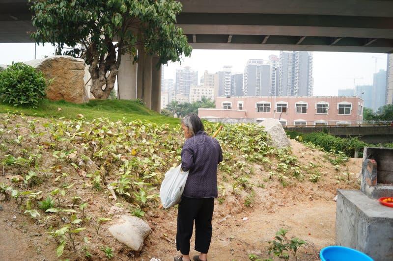 Chinese bejaarden stock foto