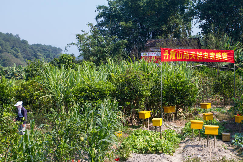 Chinese Bijenbewaarder royalty-vrije stock foto's