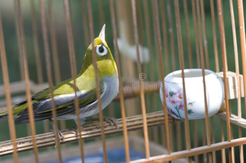 Chinese Bird Cages. Bird stay in Chinese style bird cages royalty free stock image