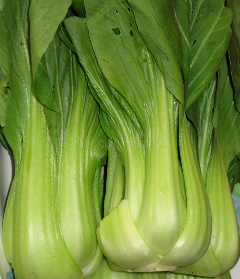 Chinese Bok Choy Vegetable stock photo