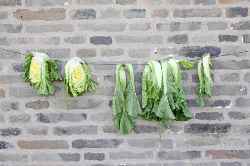 Chinese cabbage hanged on the walls. In countryside stock photos
