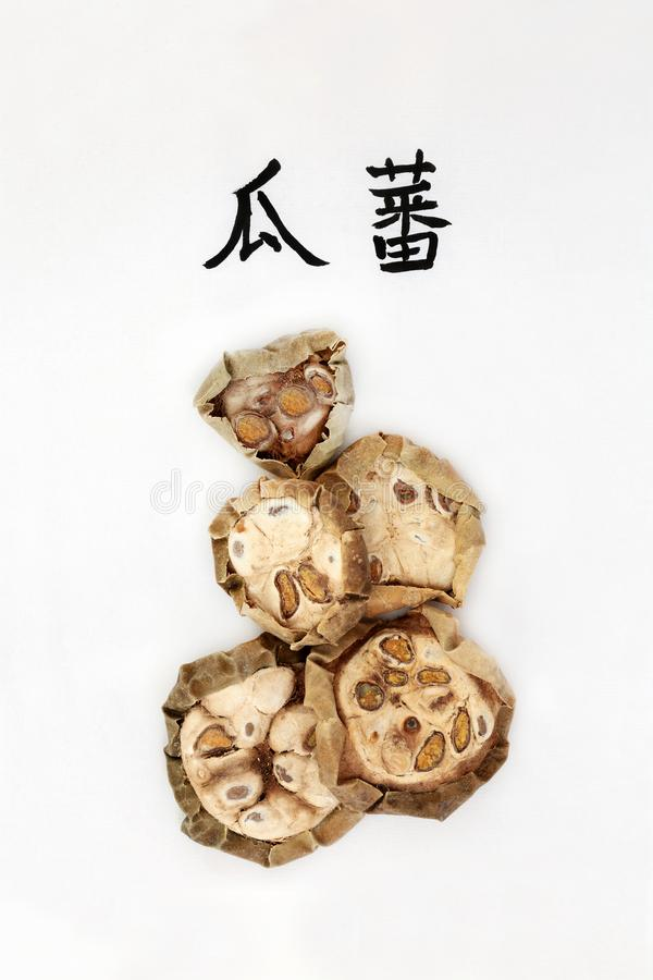 Chinese Cucumber Herb. Used in chinese herbal medicine with calligraphy script, used for chest and lung infection problems. Translation reads as chinese royalty free stock photos