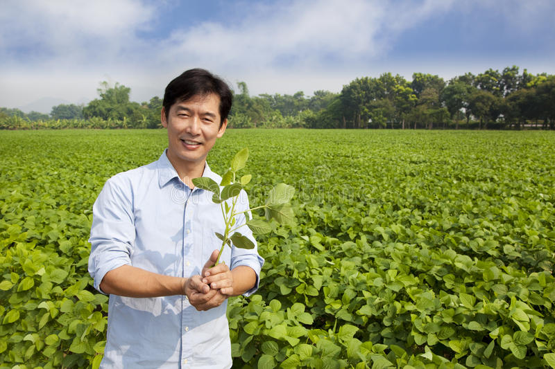 Download Chinese Farmer Holding Sapling Stock Image - Image of harvesting, middle: 21709823